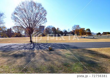 午後の日差しに照らされ影が広がる公園の欅 72756381