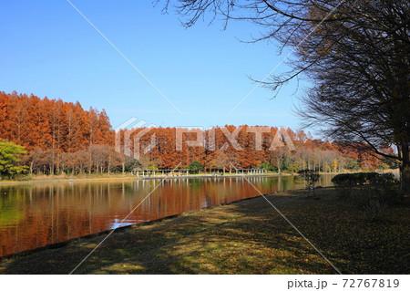 12月 葛飾54メタセコイヤ並木の紅葉・水元公園&みさと公園 72767819