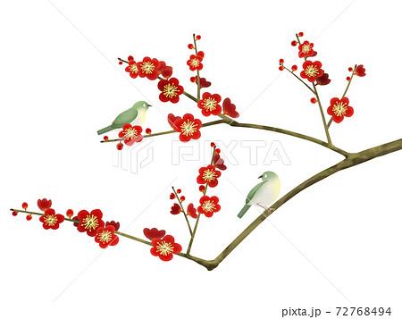 梅の花と小鳥 - 複数のバリエーションがあります 72768494