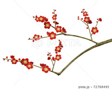 梅の花 - 複数のバリエーションがあります 72768495