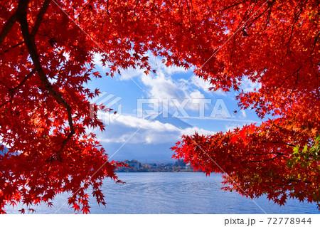 富士山と紅葉 72778944