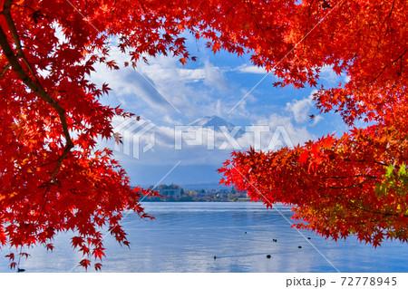 富士山と紅葉 72778945