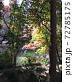 昼の森の景色 72785175