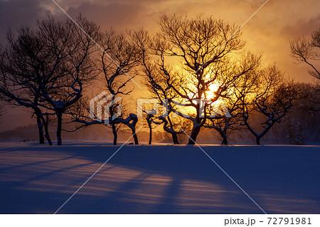 雪の桧原湖の夜明け 赤い雪面に木立のシルエット 72791981
