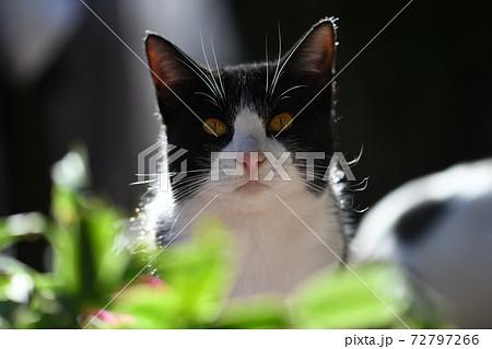 若い猫と冬の陽光 72797266