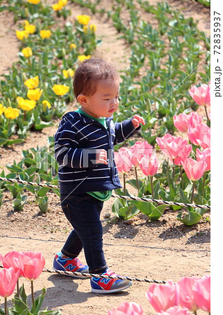 チューリップ畑でよちよち歩きの1歳の子供 72835937