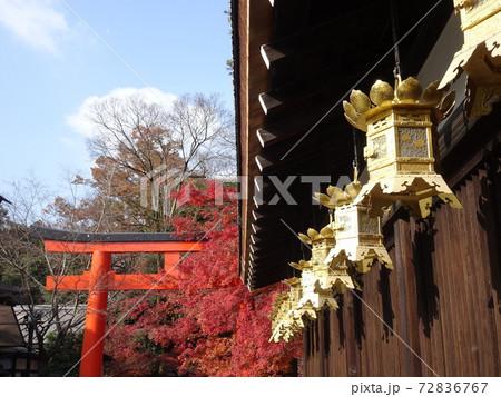 軒下の蟷螂と真っ赤なもみじと鳥居の見える風景 72836767