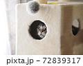 キャットタワー ボックスの中から覗く猫 72839317