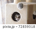 キャットタワー ボックスの中から覗く猫 72839318