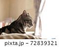 ベッドの上で寛ぐ猫 上半身アップ 横向き 72839321