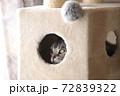 キャットタワー ボックスの中から覗く猫 72839322