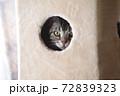 キャットタワー ボックスの中から覗く猫 72839323