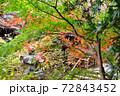 晩秋の鎌倉古寺の紅葉 72843452