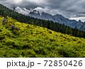 Herd Of Cows In National Park Gesaeuse In The Ennstaler Alps In Austria 72850426