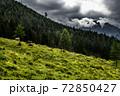 Herd Of Cows In National Park Gesaeuse In The Ennstaler Alps In Austria 72850427