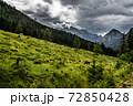 Herd Of Cows In National Park Gesaeuse In The Ennstaler Alps In Austria 72850428