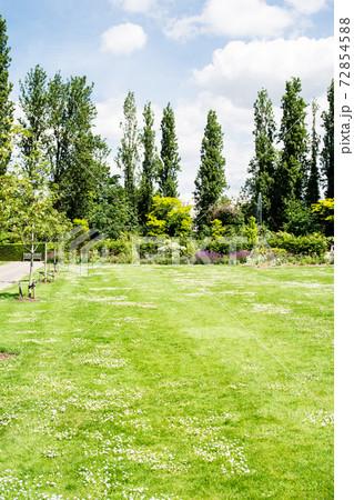 明るい日差しの下のリージェンツパーク 小さい白い花が咲く広々とした芝生と大木 72854588