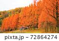 メタセコイアの紅葉 72864274