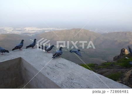 インドのジュナーガルの聖地ギルナール山の順番に飛ぶ鳩 72866481