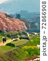 賀茂川の桜と菜の花を望遠で 72866908