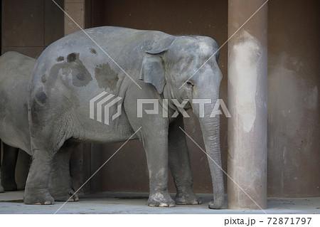 動物園の親像(ゾウ 東山動植物園 愛知県名古屋市) 72871797