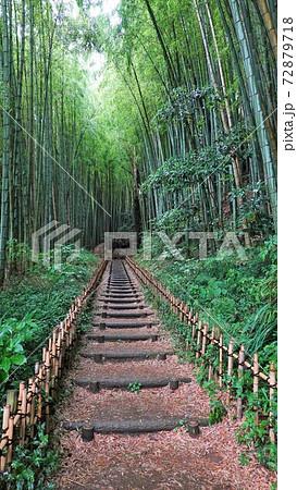 時代劇のような竹林の坂道 258 72879718