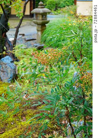 庭園のナンテンと石灯ろう 渉成園 72884461