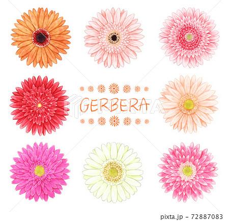 8種類のガーベライラスト 72887083