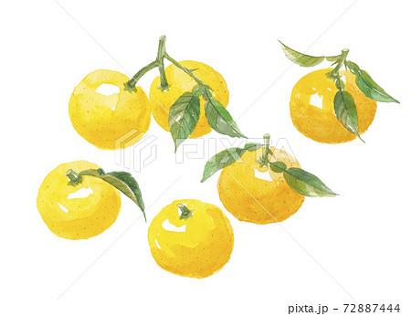葉付き柚子 6個 72887444