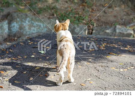 陽に当たる野良猫の後ろ姿 おしりとしっぽ 72894101