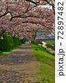 賀茂川の桜並木の遊歩道、散歩する人たちがちらほらと。 72897482