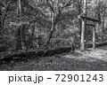 苔むした平泉寺白山神社 御手洗池(福井県勝山市) 72901243