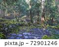 苔むした平泉寺白山神社 御手洗池(福井県勝山市) 72901246