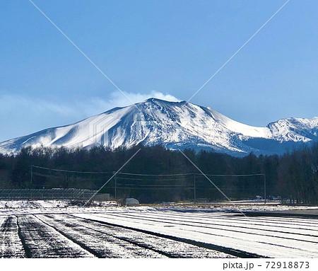 早春のキャベツ畑から撮った群馬県側からの浅間山 72918873