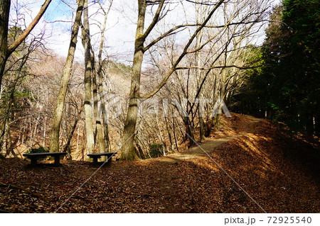 川苔山 船井戸から川苔山方面への道 72925540