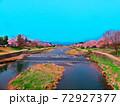 賀茂川両岸、満開の桜並木 72927377