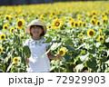 ひまわり畑 72929903