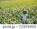 ひまわり畑 72929904