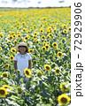 ひまわり畑 72929906