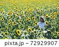 ひまわり畑 72929907