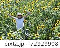 ひまわり畑 72929908