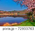 京都・深泥池と満開の桜 72933763