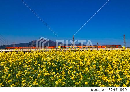 満開の菜の花畑と大山そして小田急ロマンスカーGSE 72934849