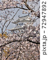 世界遺産姫路城と桜 72947892