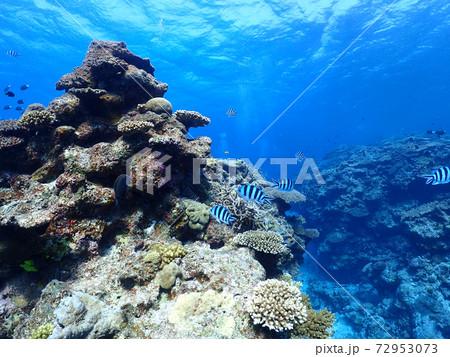 慶良間諸島で撮影した青く澄み切った綺麗な海とサンゴ礁の城 72953073