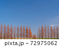 並木の空 72975062