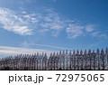 メタセコイアと雲 72975065