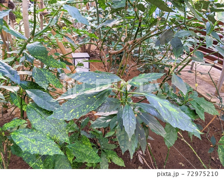 公園にある整えられた植木(横方向の画像) 72975210