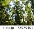 伊勢神宮内宮に生い茂る木々(三重:伊勢) 72979401