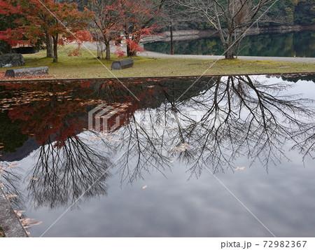愛媛三島川之江 金砂湖水車公園の池に映る紅葉と木立 72982367